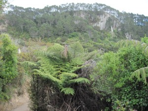 Trail to Cathedral Cove passes through native bush and puriri trees.