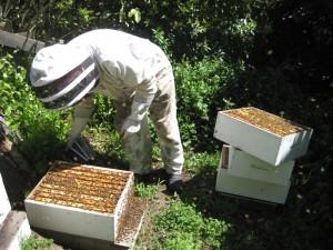 Colin Wharton's Bee Hive