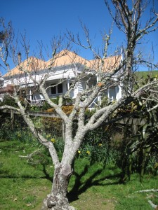 New Zealand Fruit Trees and Villa, Thames, New Zealand
