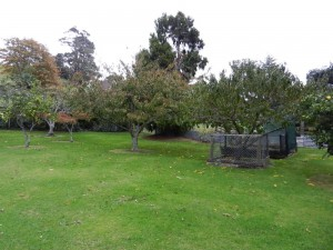 New Zealand Fruit Trees near Thames at Whakatete Bay