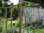 Grape Arbor Construction, Step 2, Support Beams